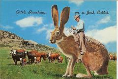 Jackalope Riding